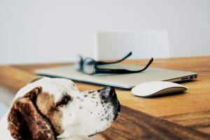 szkolenie psów online